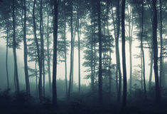Silhouettes of trees in morning light in a forest Stock Photos