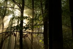 The silhouettes of the trees. Morning rays of slunečbí September between the trees in the forest royalty free stock photography