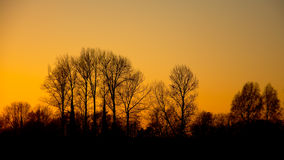 Silhouettes of trees in orange glow just after sunset Royalty Free Stock Photos