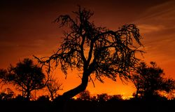 Silhouettes of trees over the red sky Stock Photo