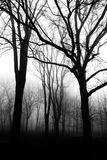 Silhouettes of trees in the park foggy morning Royalty Free Stock Photo