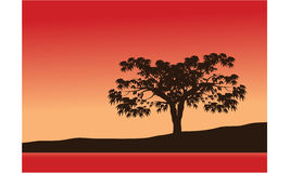 Silhouettes of trees with red background Royalty Free Stock Photo
