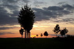 Silhouettes of Trees at Sunset Royalty Free Stock Photo