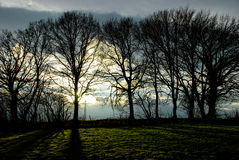 Silhouettes. Of trees on a sunset Stock Photos