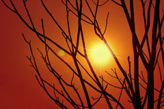Silhouettes of trees at sunset Stock Image