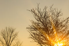 Silhouettes of trees at sunset Stock Photography