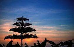 Silhouettes of trees at sunset. Stock Photos