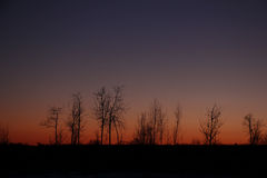 The silhouettes of the trees at sunset Stock Photography