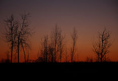 The silhouettes of the trees at sunset, with star Royalty Free Stock Photography