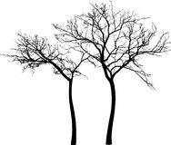 Silhouettes of the trees Stock Images