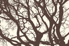 Silhouettes of trees Royalty Free Stock Images