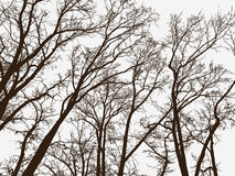 Silhouettes of the trees in a winter park Royalty Free Stock Image