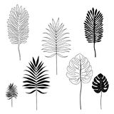 Silhouettes of tropical leaves. Set of object isolated on white background Royalty Free Stock Photography