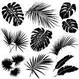 Silhouettes of tropical leaves. vector illustration