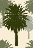 Silhouettes of the tropical palm trees Royalty Free Stock Photo
