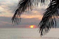 Silhouettes tropicales de coucher du soleil images libres de droits