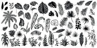 Silhouettes tropicales de feuilles d'isolement sur le fond blanc Photographie stock libre de droits