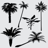 Silhouettes tropicales de vecteur de palmier d'isolement sur le fond blanc Image stock