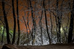 Silhouettes of trunks of trees at night in the mixed lighting. Royalty Free Stock Photography