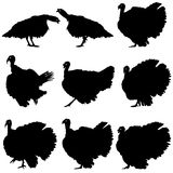 Silhouettes of turkeys. Royalty Free Stock Photography