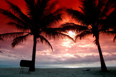 Silhouettes of two coconut trees. With red sky of sunset Royalty Free Stock Images