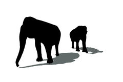 Silhouettes of two elephants Royalty Free Stock Photos