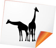 Silhouettes of two giraffes on a paper Royalty Free Stock Photo