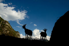 Silhouettes of two goats in the mountains Stock Image
