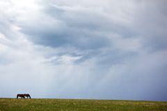 Silhouettes of two horses and storm sky Stock Photo