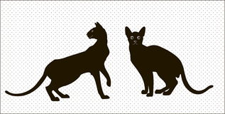 Silhouettes of two oriental cats Stock Image