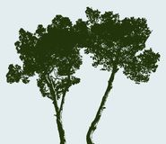 Silhouettes of two pine trees. Vector image of the italian pine trees Stock Photos