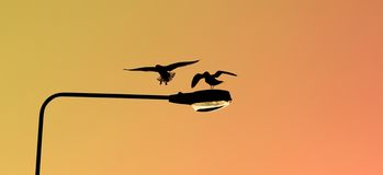 Silhouettes of two seagulls landing on a lamp post at sunset royalty free stock image