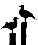Sea gull silhouettes. Silhouettes of two seagulls standing on pier. Isolated objects against white background Stock Photography