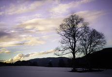 Silhouettes of two trees against the winter sky. Tree silhouettes against the sky in winter Royalty Free Stock Photo