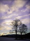 Silhouettes of two trees against the winter sky. Tree silhouettes against the sky in winter Royalty Free Stock Photos