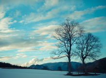 Silhouettes of two trees against the winter sky Stock Images