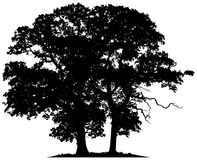 Silhouettes of two trees Royalty Free Stock Photos