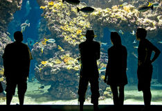 Silhouettes of visitors in aquarium Royalty Free Stock Image
