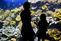 Silhouettes of visitors in aquarium Stock Photos