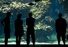 Silhouettes of visitors in aquarium Royalty Free Stock Photos