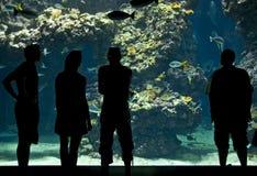 Silhouettes of visitors in aquarium Royalty Free Stock Photos