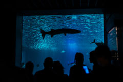 Silhouettes of visitors, people in an aquarium with fish. Royalty Free Stock Images