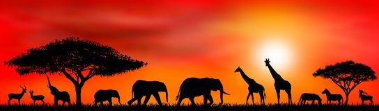 Savanna animals on a background of a sunset sun stock photos