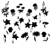 Silhouettes of wild flowers Royalty Free Stock Image