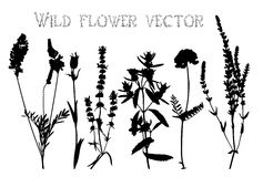 Silhouettes of wild flowers and leaves vector Stock Photo