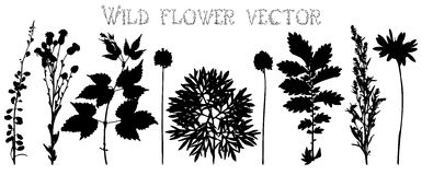 Silhouettes of wild flowers and leaves vector Royalty Free Stock Photography