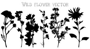 Silhouettes of wild flowers and leaves vector Royalty Free Stock Photo
