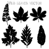 Silhouettes of wild flowers and leaves vector Royalty Free Stock Photos