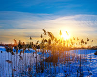 Silhouettes of wild vegetation at sunset light Stock Photo