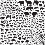 Silhouettes of wildlife Asia. More than 300 silhouettes of animals Royalty Free Stock Photos